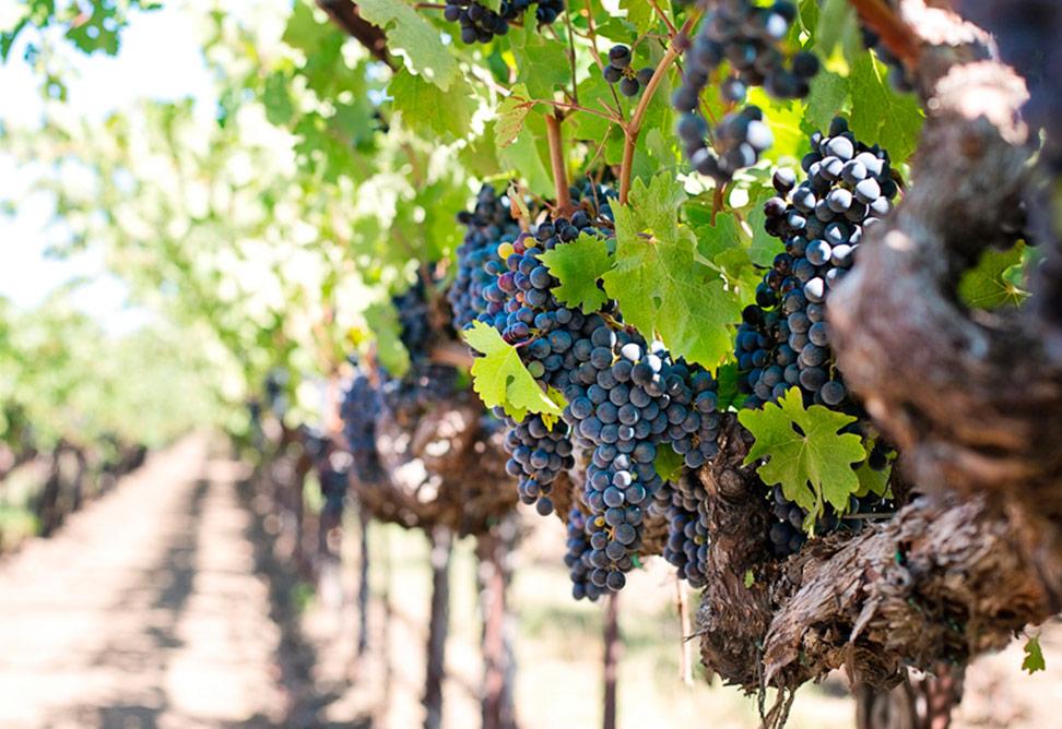 El origen del vino en Próximo Oriente Arqueogastronomía Blog