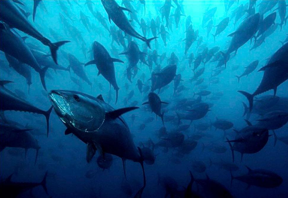 Garum de atún rojo: el regreso del umami del mar Arqueogastronomía